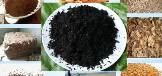 Carbonization of Different Biomass Raw Materials